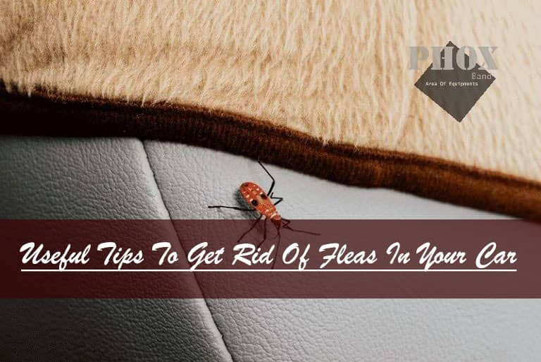 how to get rid of fleas in your car